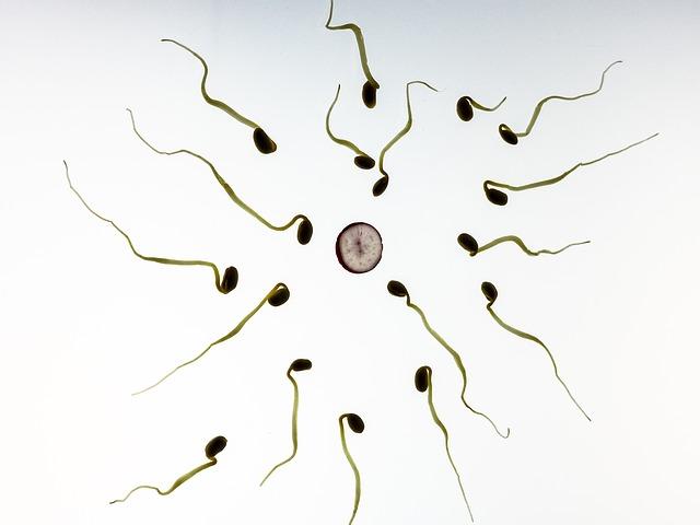 rappresentazione di come l'acido ialuronico aiuta la selezione degli spermatozoi