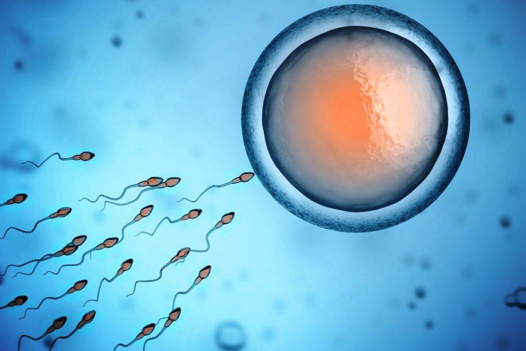 rappresentazione di inseminazione intrauterina