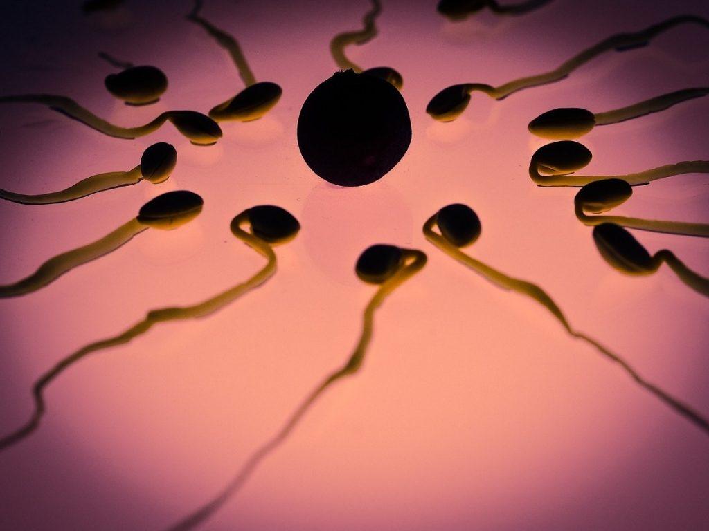 Foto di spermatozoi e uovo per indicare una tecnica di PMA